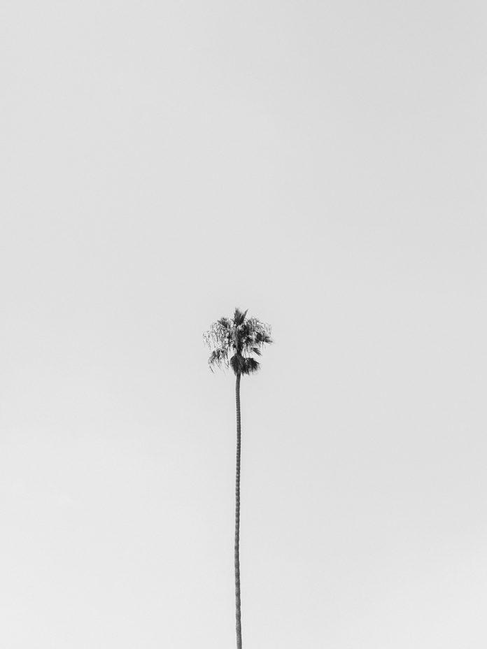 Los Angeles Modern
